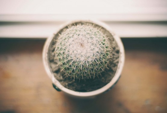 Cactus on Pot